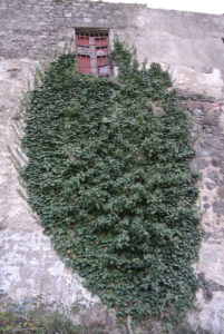caseificio_albano_dsc_4660