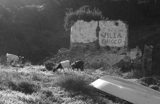 villa-chicco